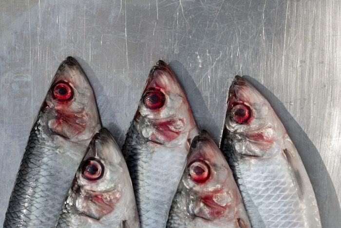 red herring fish